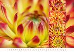 floral colors 2013 - 10