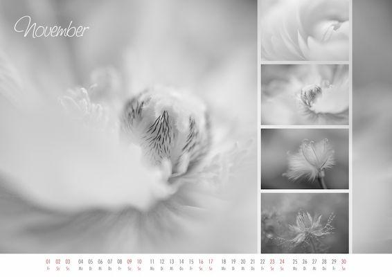 floral colors 2013 - 11