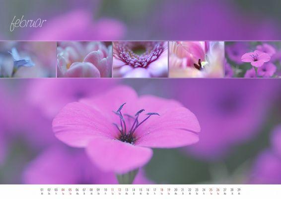 floral colours 2012 - 02