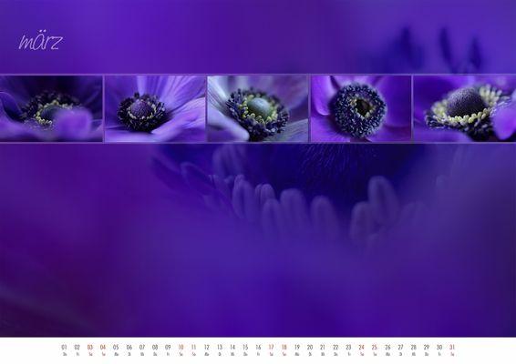 floral colours 2012 - 03