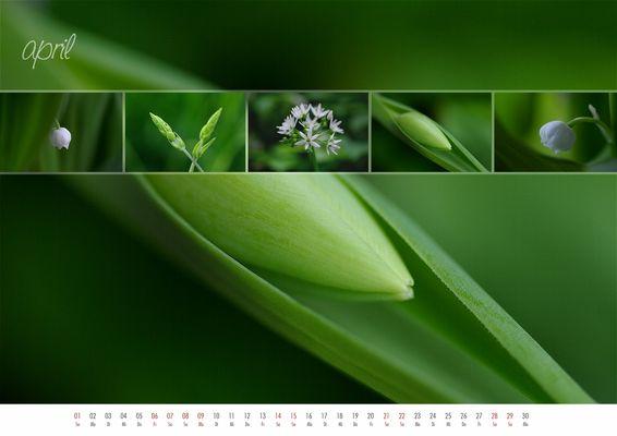 floral colours 2012 - 04