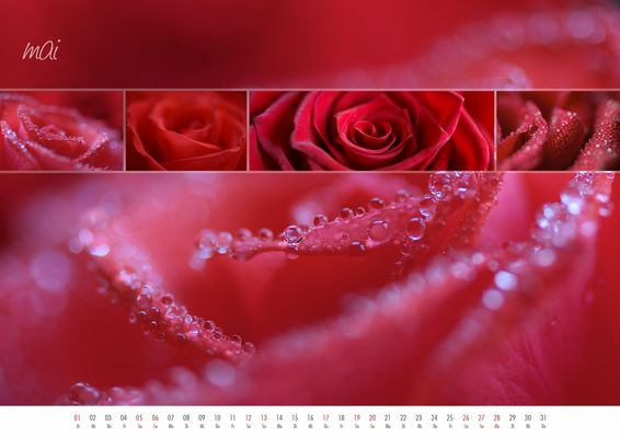 floral colours 2012 - 05