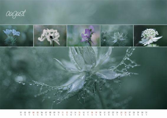 floral colours 2012 - 08