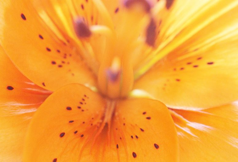 - floral light - 3