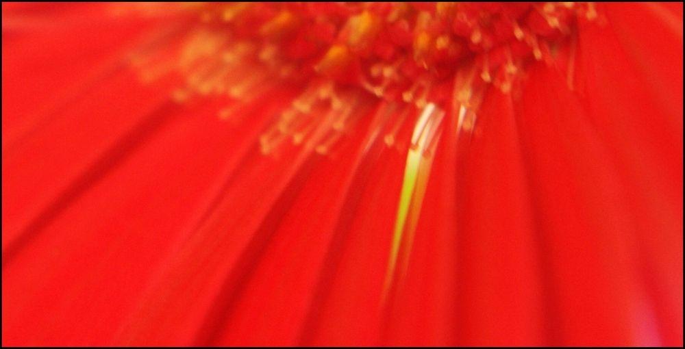 - floral light -