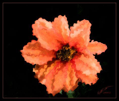 .: floral romance :.