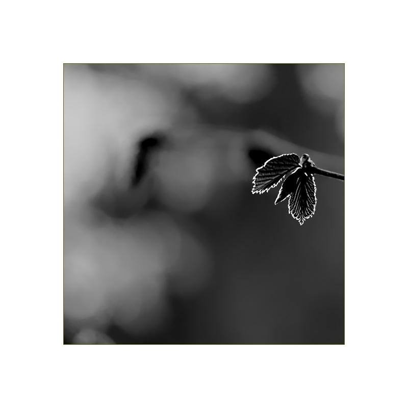 florale grafik *17*