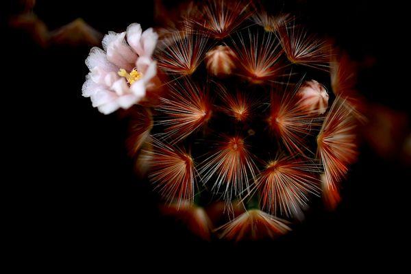 florale grafik *18*