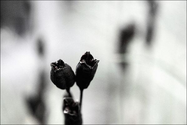 florale grafik *23*