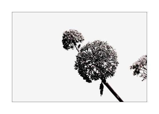 florale grafik *24*