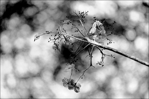 florale grafik *25*