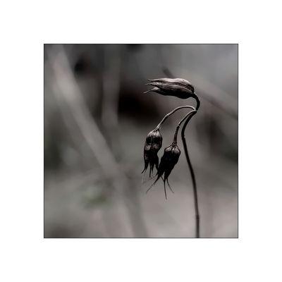 florale grafik *31*