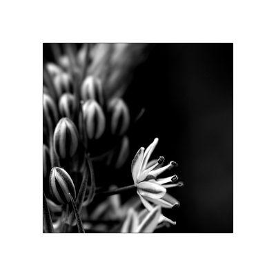 florale grafik *34*