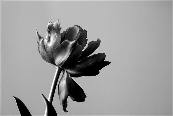 florale grafik *35*
