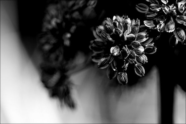 florale grafik *36*