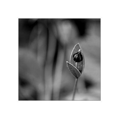 florale grafik *44*
