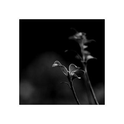 florale grafik *45*