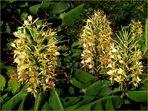 Florale Wunderkerzen