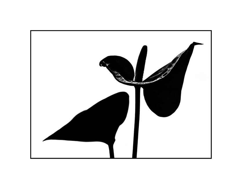 Floraler Schattenriß