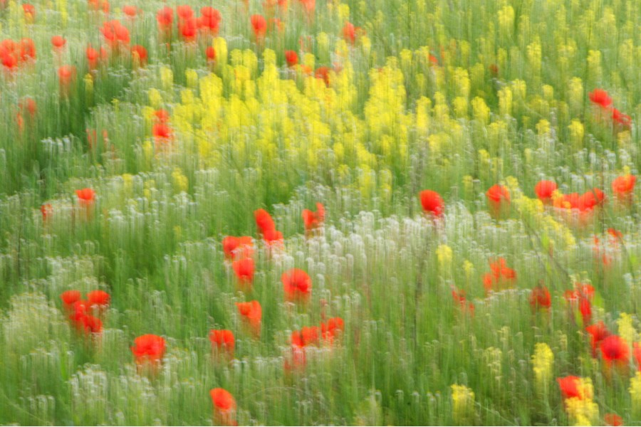 Floraler Surrealismus