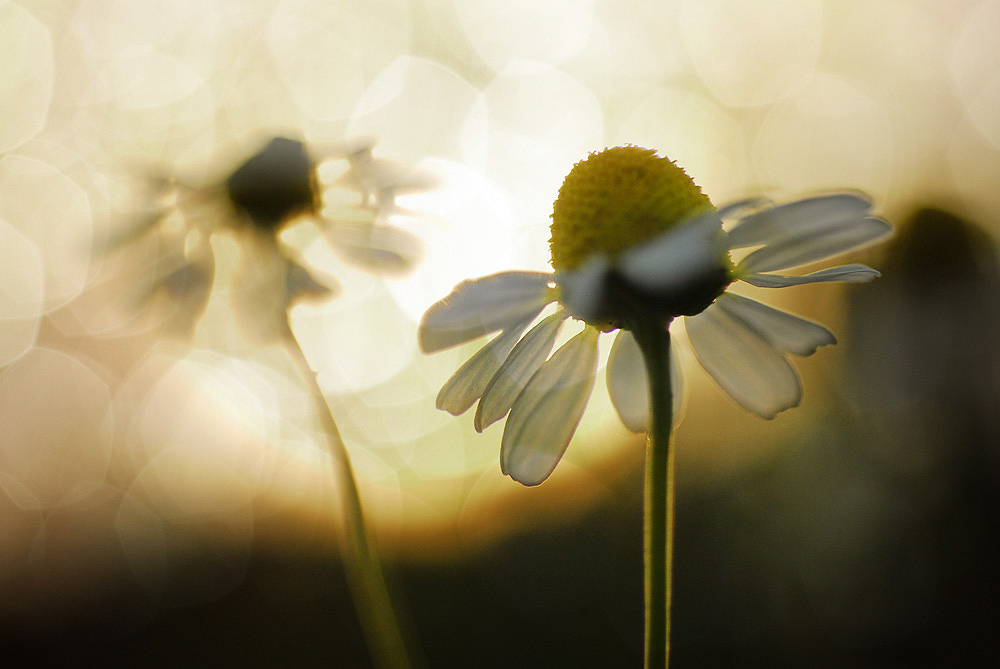 florales V