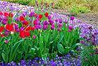 Florapark 3 - cool colores ;-))