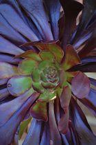 florascape#01