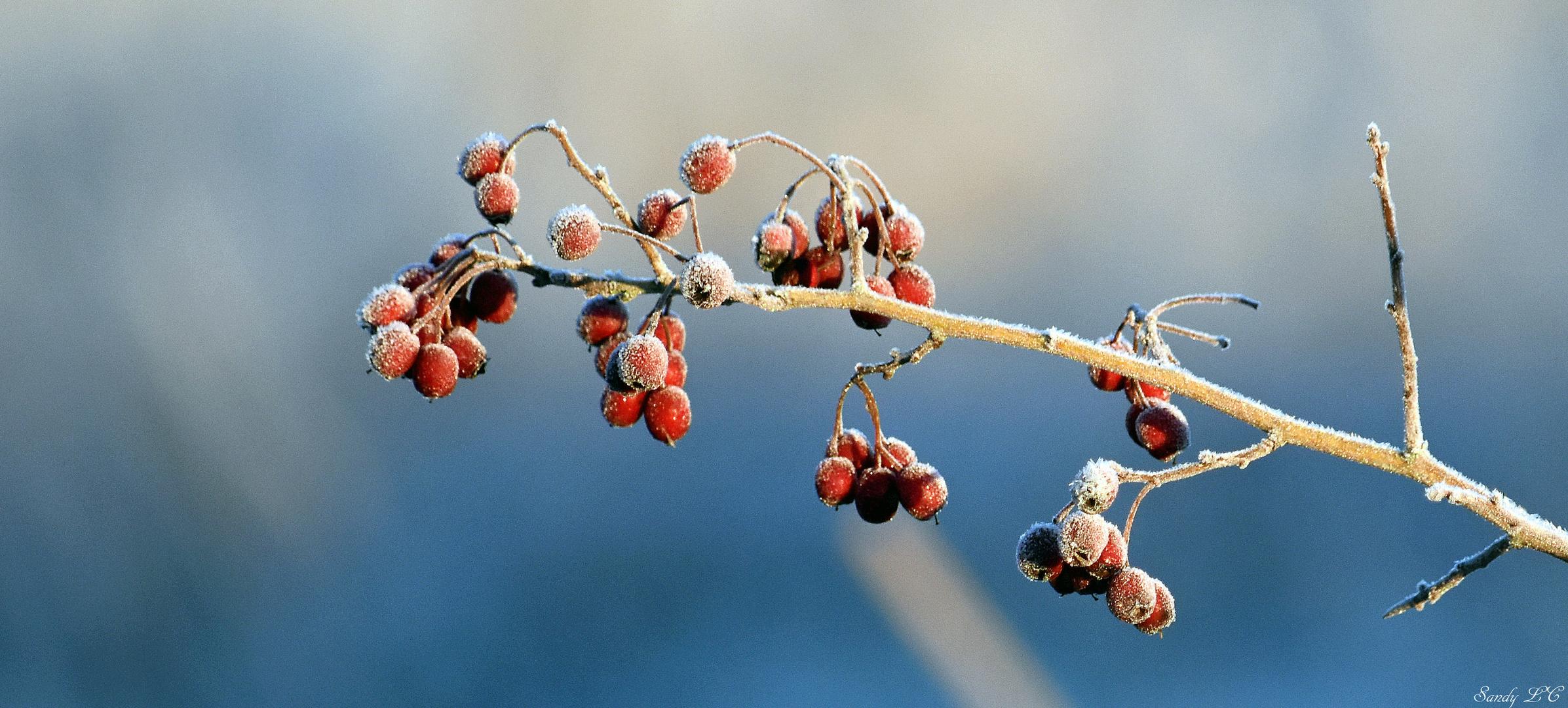 Flore du marais glacé