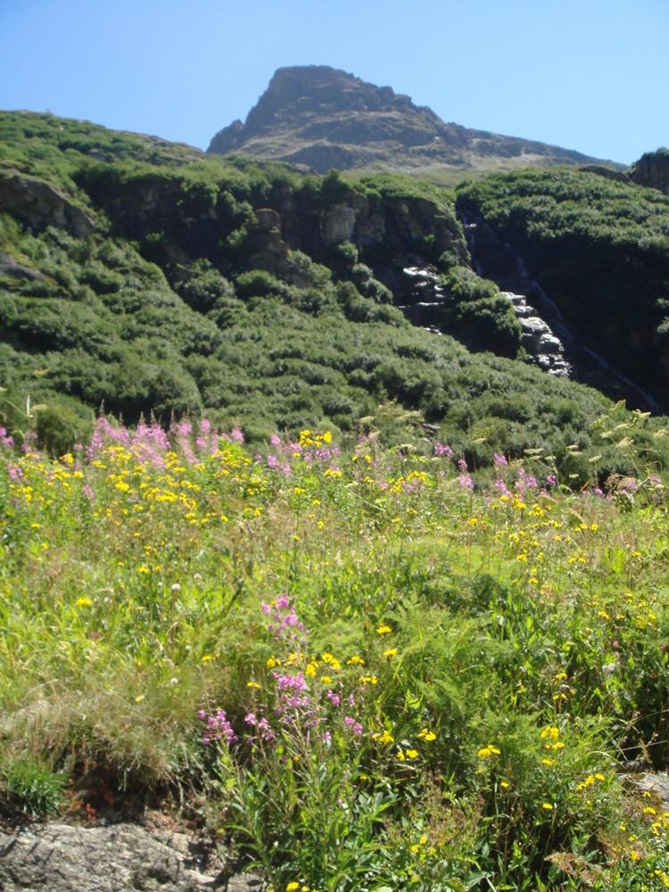 Flore et Altitude