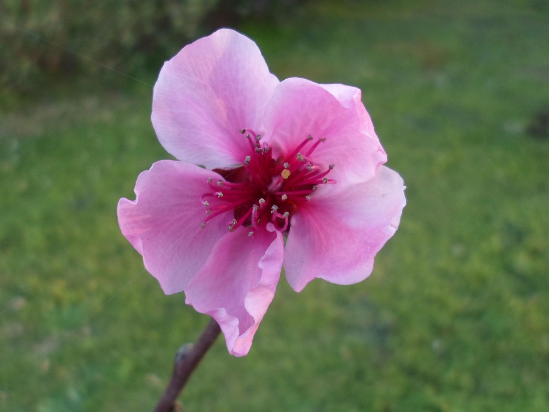 Flore Ser ...Florecida