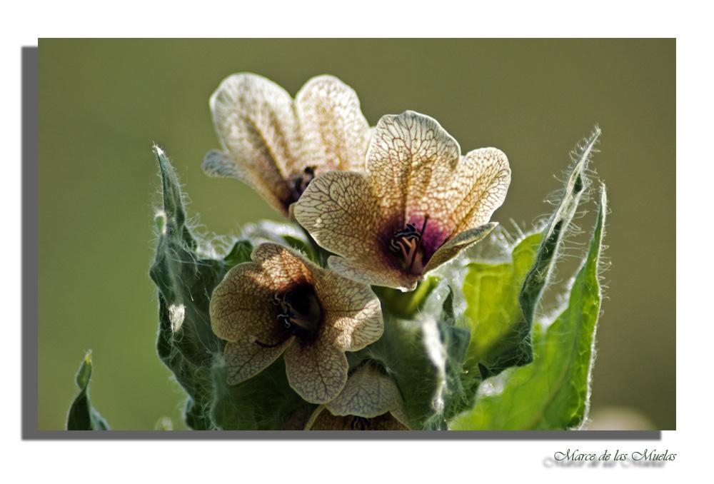 Florecillas pequeñas...3