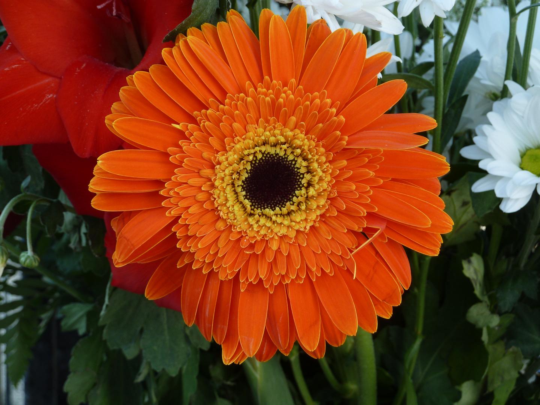 Flores (11)