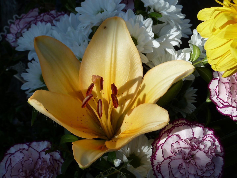 Flores (12)
