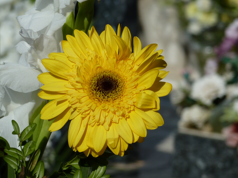 Flores (13)
