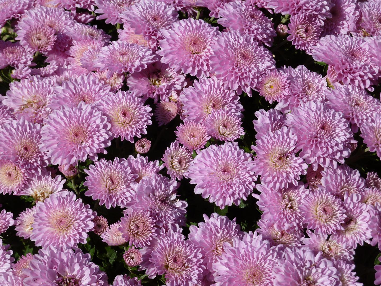 Flores (14)