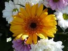 Flores (17)