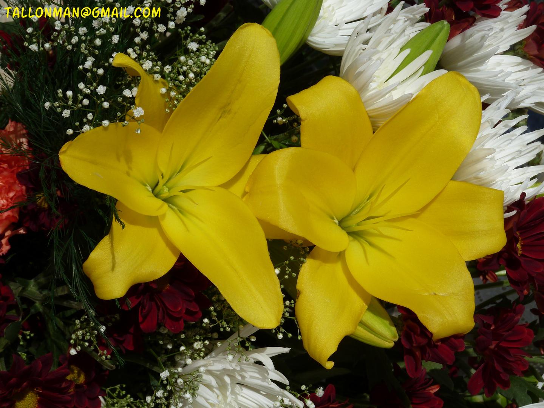 Flores (21)