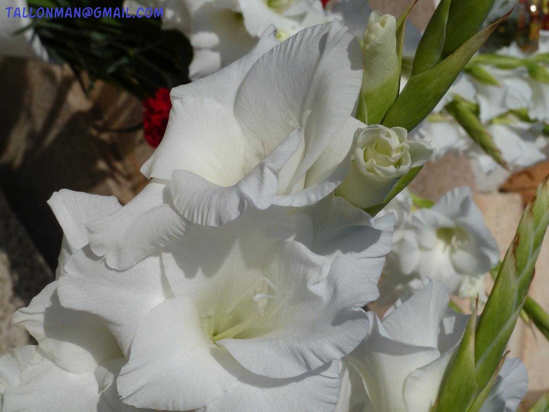 Flores (22)