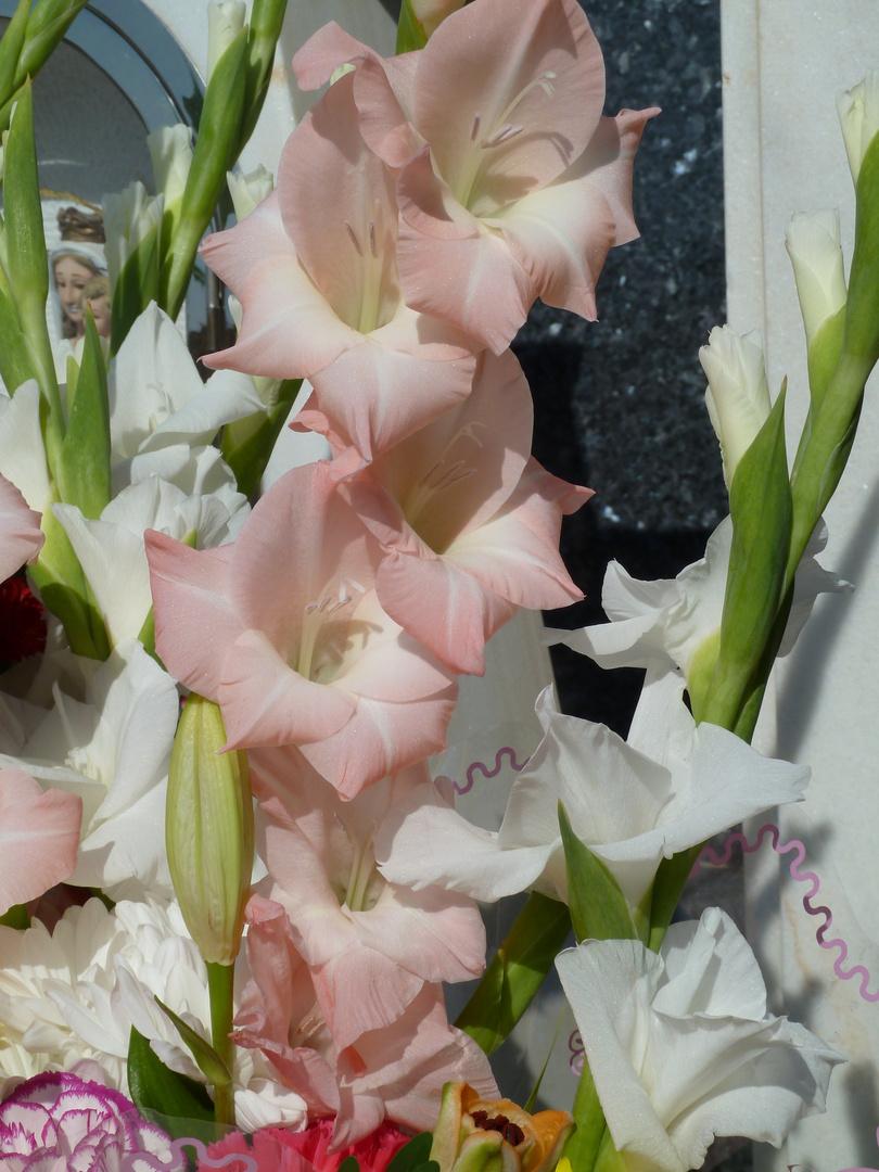 Flores (34)