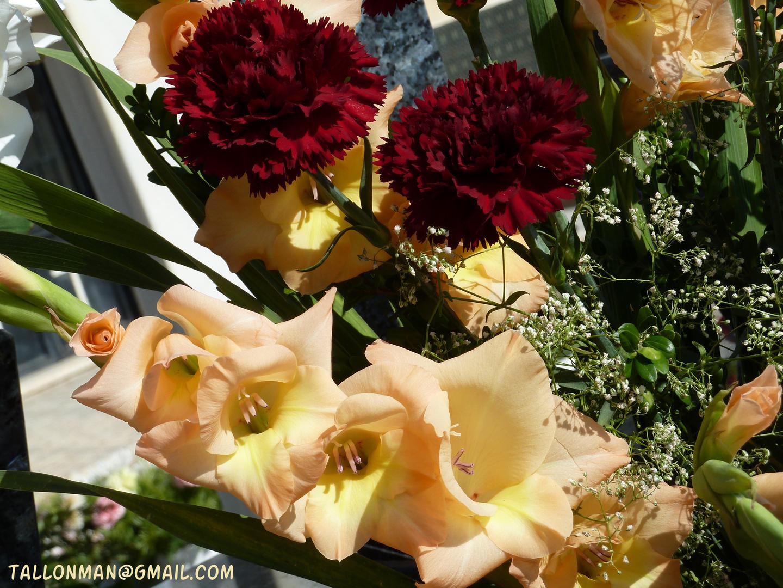 Flores (35)