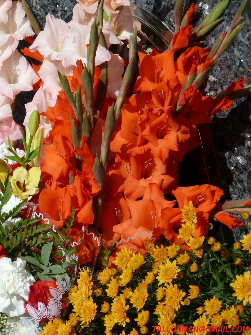 Flores (41)