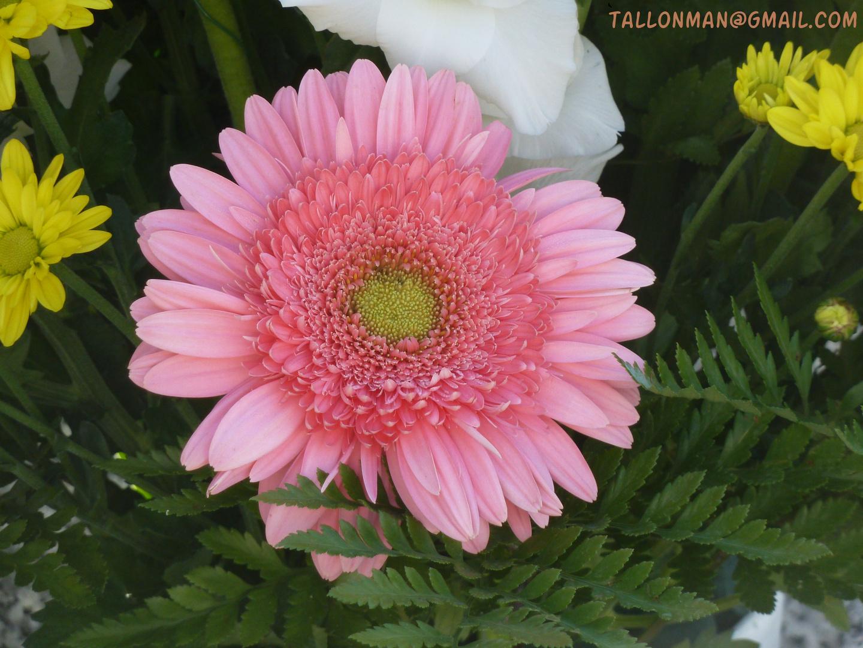 Flores (42)