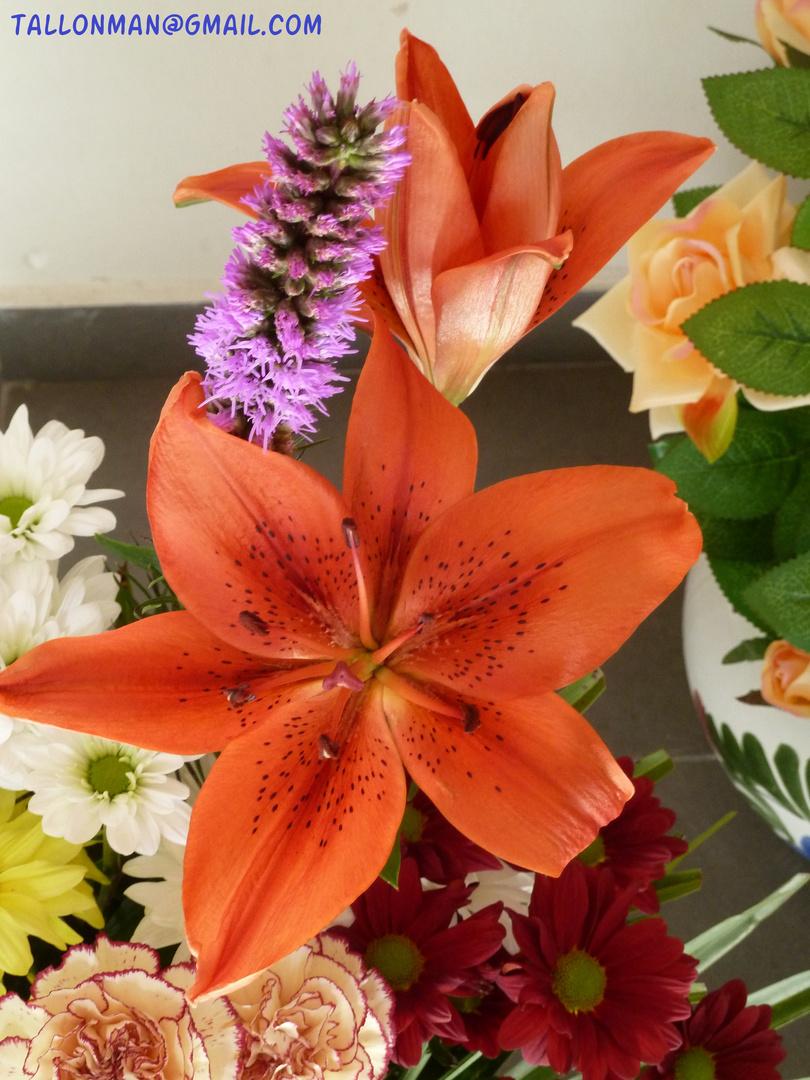 Flores (48)