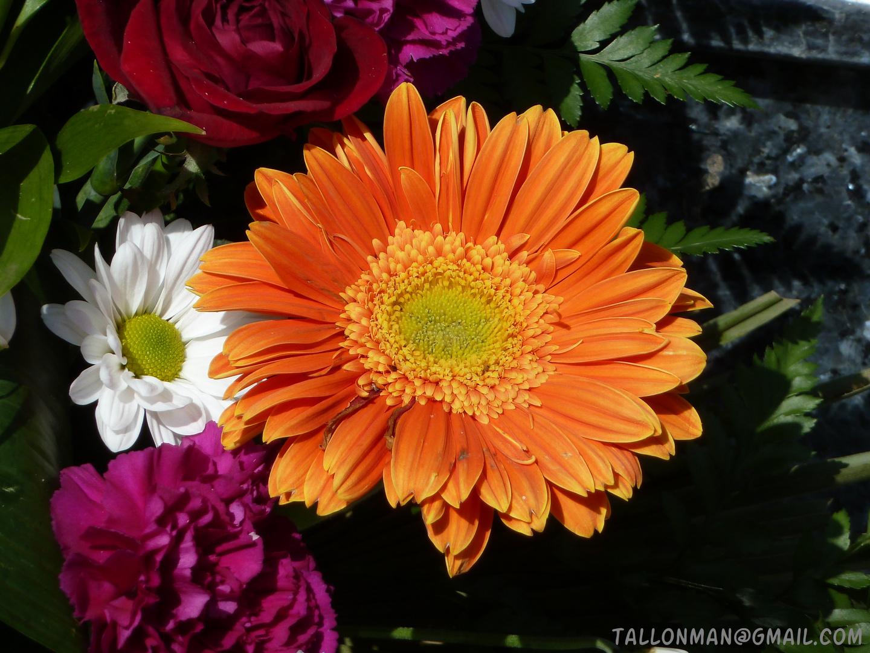 Flores (52)