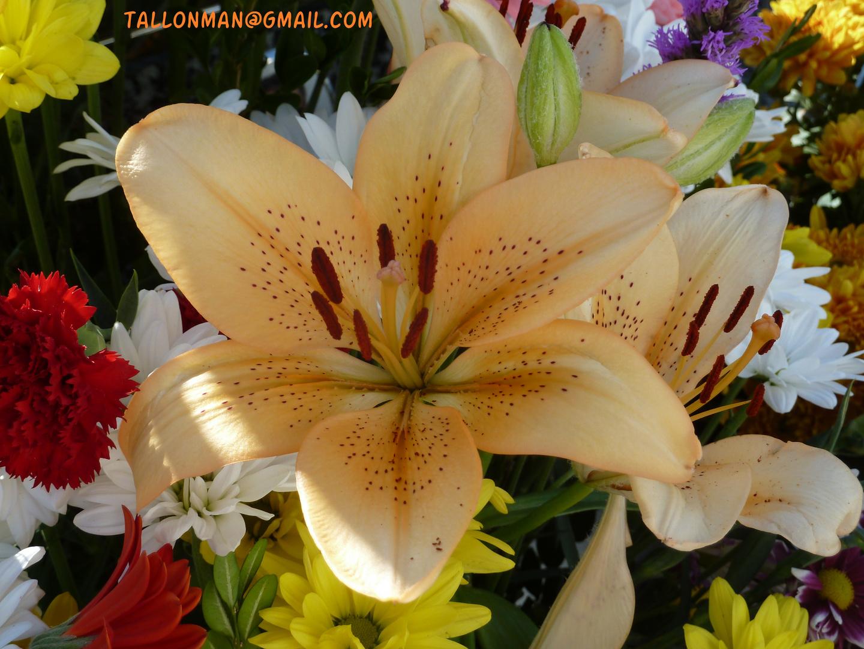 Flores (58)