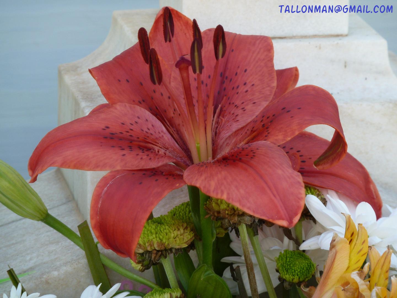 Flores (61)