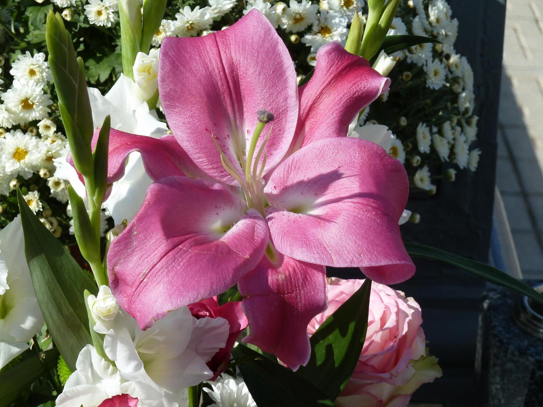 Flores (8)