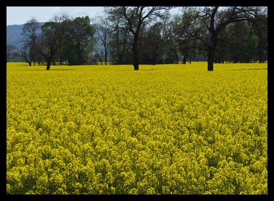 Flores amarillas de primavera