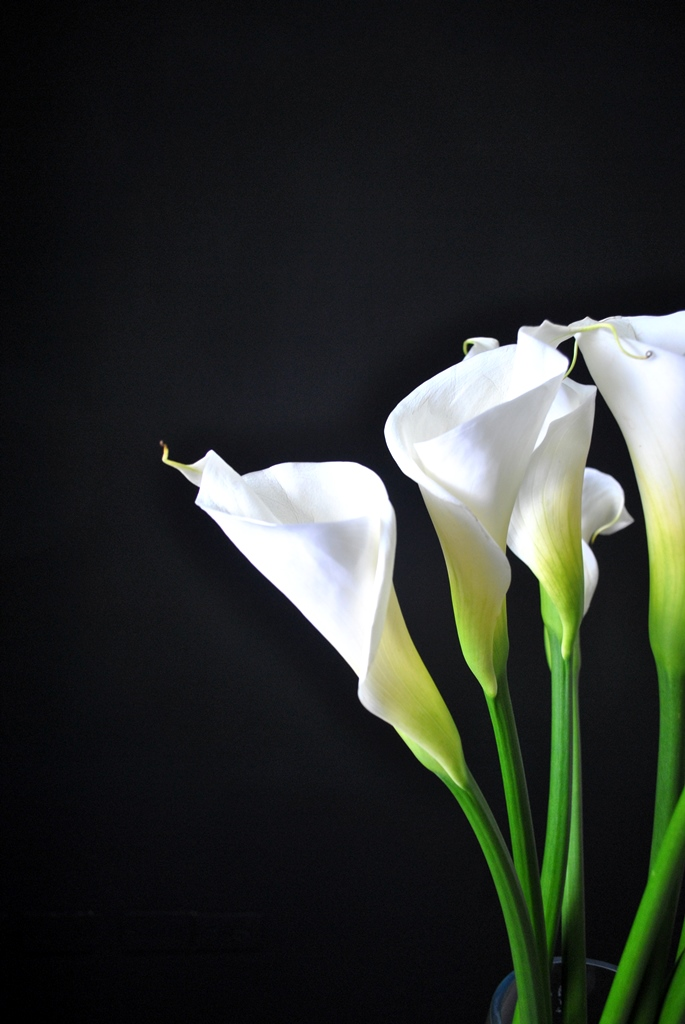 Fotos de flores blancas 69