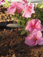 Flores de la Calzada